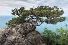 Crimean Peninsula,  Black Sea Coast Royalty Free Stock Images