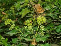 Crimean. The Crimean plants Massandra in autumn Stock Photography