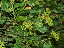 Crimean. The Crimean plants Massandra in autumn Royalty Free Stock Image