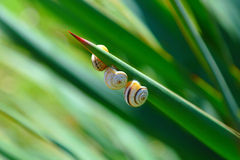 Crimean snails Stock Photo