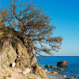 Crimean tree over sea landscape Stock Photos