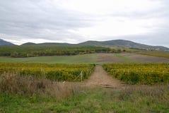Crimean vingård Fotografering för Bildbyråer