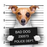 Mugshot dog at police station royalty free stock photography