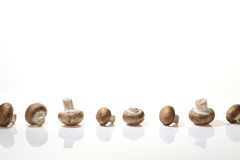 Crimini Mushrooms in a Row on White Background Stock Photography
