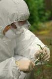 Criminologist investigates flower Stock Photo