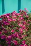 crimson blommor Royaltyfri Bild