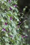 crimson blommor royaltyfri foto