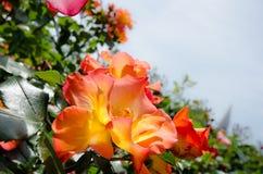 crimson blommor arkivfoton