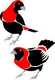 Crimson-collared tanager Royalty Free Stock Image