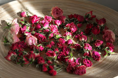Crimson dried roses Stock Photography