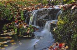 Crimson falls of autumn Royalty Free Stock Images