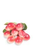 Crimson fruit named as koromcha Stock Image