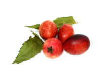 Crimson fruits or Carissa macrocarpa Stock Image