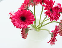 Crimson gerberas in glass vase from above Royalty Free Stock Photos