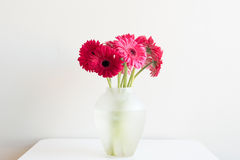 Crimson gerberas in glass vase on table Royalty Free Stock Photography