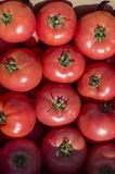 Crimson, large and fleshy tomatoes lie for sale in wooden boxes in the open air market. stock photography