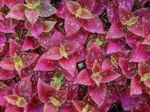 Crimson plants Stock Photos