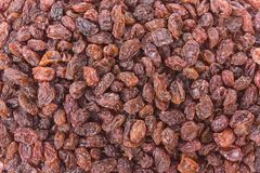 Crimson Raisins Royalty Free Stock Photos