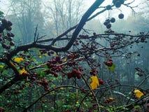 Amazing foggy landscape stock photography