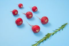 Crimson red radish and rosemary vegetable isolated on blue background. Spermatozoon swimming toward the egg. New life conception. Healthy food conception stock photos