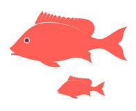 Crimson Snapper Stock Images