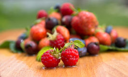 crimson steam amid berry collection Stock Photography
