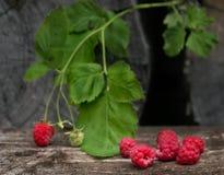 Crimson still life. Raspberry, village, boards, branch Royalty Free Stock Photo