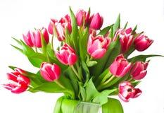 Crimson tulips Stock Images