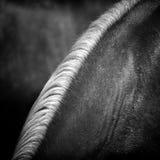 Crine di cavallo Fotografie Stock