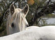 Crinière de cheval photos libres de droits