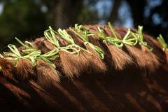 Crinière de cheval attachée et décorée des rubans verts, détail Images stock