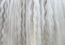 Criniera bianca lunga della fine del cavallo su Fotografia Stock