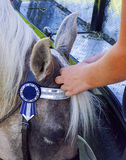 Criniera d'intrecciatura dei cavalli Fotografia Stock