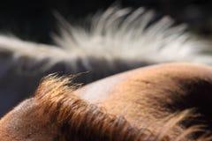 Criniera dei cavalli Fotografia Stock Libera da Diritti