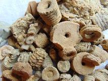 Crinoid fossils Stock Image