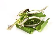 Crinum百合、花和自然胶凝体有药物特性 免版税库存图片