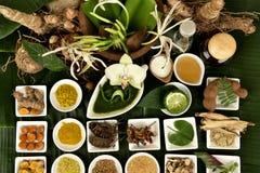 Crinum百合、花和草本有药物特性 免版税库存图片