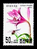 Crinum x Powellii, serie internacional de Genebra da exposição do selo, cerca de 1992 Imagens de Stock Royalty Free