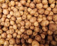 Criolla colombien de papa de pommes de terre, produit de phureja de solanum sur un marché image stock
