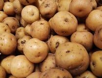 Criolla créole colombien de papa de pomme de terre Produit cru de tubercule images stock