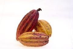 Criollo rozmaitości kakao owoc Zdjęcie Royalty Free