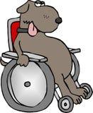 Crippled dog vector illustration