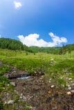 Crique au Mt Mirnock Images libres de droits