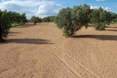 Crique borgne en Australie image libre de droits