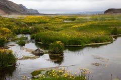 Crique chaude dans les montagnes, vallée Landmannalaugar, Islande Images stock