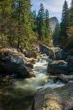 Crique débordante dans une forêt Image libre de droits
