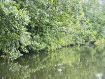 Crique d'étang de forêt avec des arbres Photographie stock libre de droits