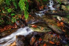 Crique d'automne avec des pierres Image libre de droits