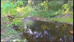 Crique d'automne dans la nature clips vidéos
