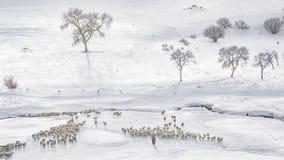 Crique d'hiver photographie stock